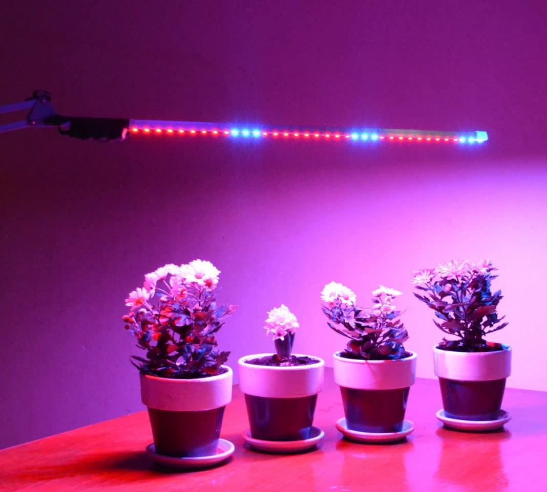 Светодиодная подсветка растений своими руками растения фото 954